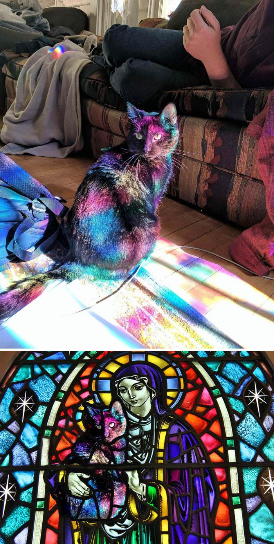 Gato bañado en la luz que atraviesa una vidriera