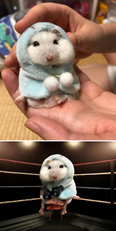 Hamster Wearing A Hoodie