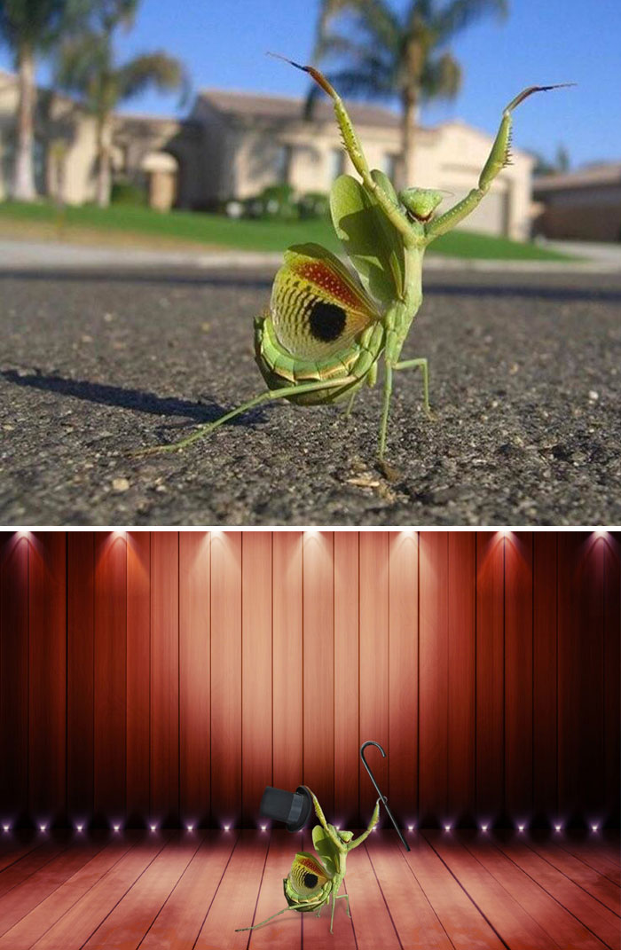 This Neighborhood Mantis