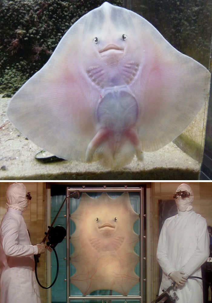 This Stingray Against The Glass