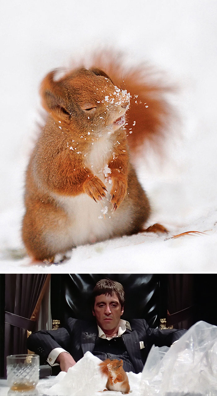 Squirrel With Snow On Nose