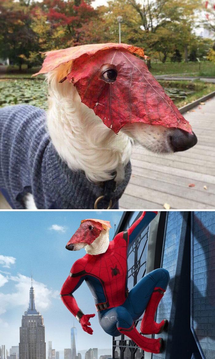 Perro con una máscara de hoja