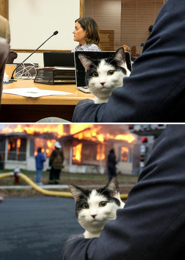 Cat Attends Denver City Council Meeting