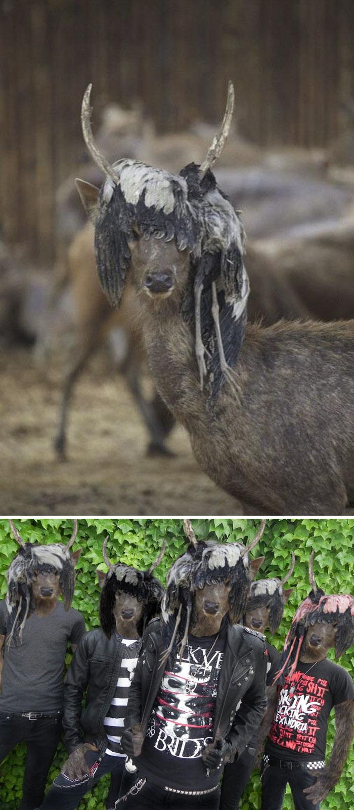 This Deer Wearing A Dead Bird Wig