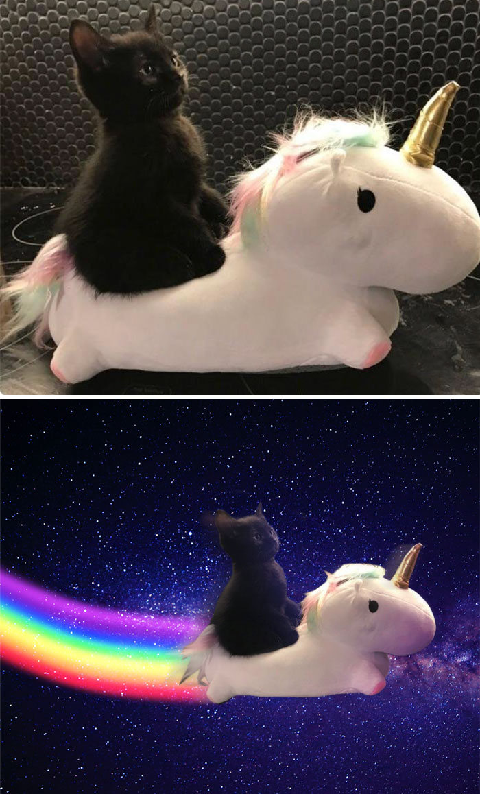 This Little Guy And His Noble Steed