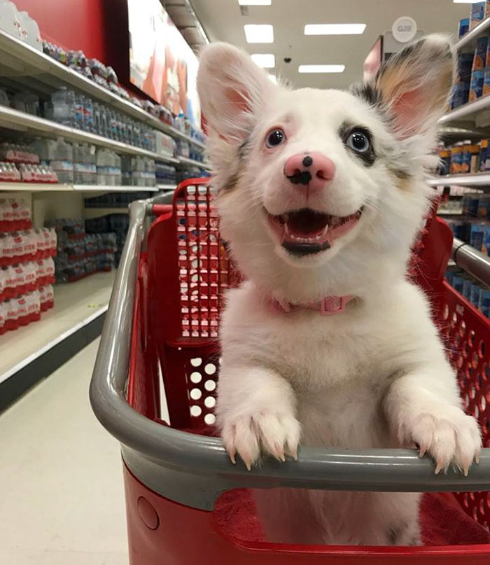 Image result for photo of dog shopping