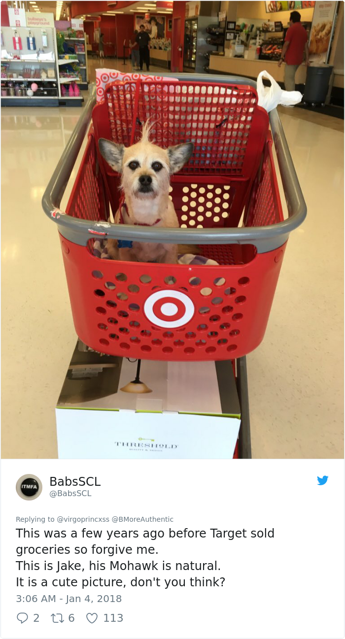 happy-dog-shopping-target-zira-the-corgi-virgoprincxss (2)