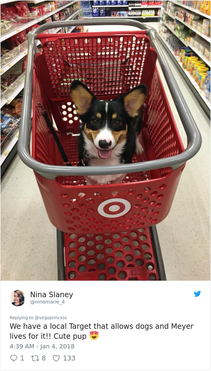happy-dog-shopping-target-zira-the-corgi-virgoprincxss (4)