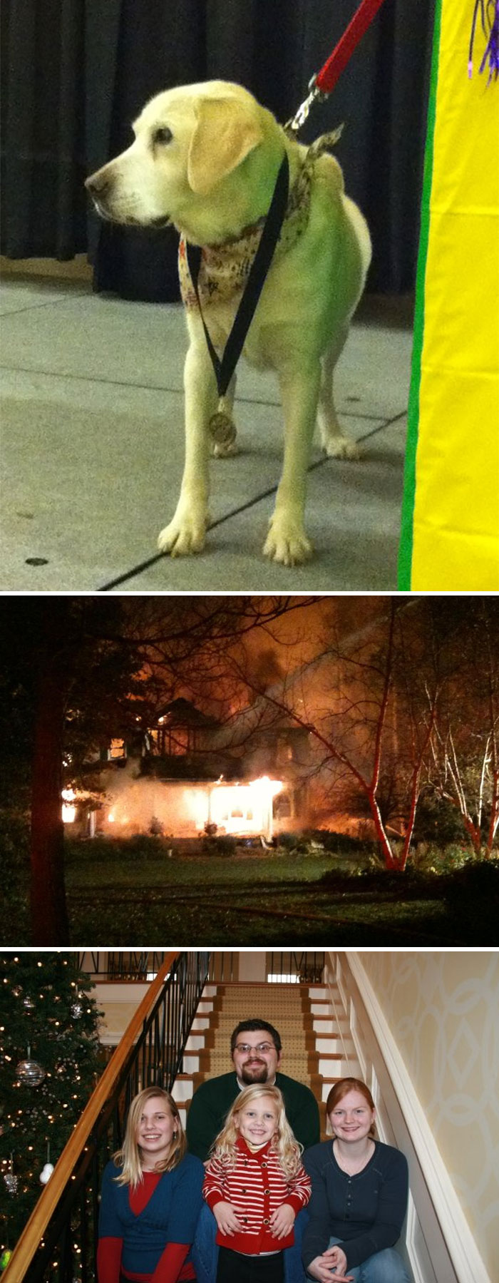 Our Blind Dog Molly Saved The Lives Of 7 People, 2 Dogs, And 4 Cats From Fire