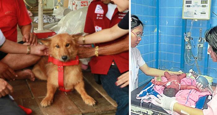 Dog Saves Newborn Baby Tossed In Thailand Garbage Dump