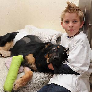 Este perro de 8 meses salvó a un niño de ser atropellado por un camión. Lo empujó y fue atropellado él