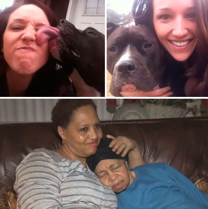 Pit Bull, Creature, Found Missing 89-Year-Old In Piscataway Woods