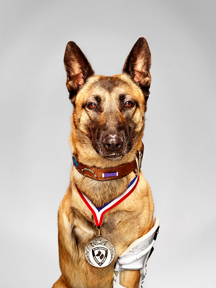 Layka The Hero Military Dog. Despite Getting Shot 4 Times By An AK-47 At Point Blank Range, She Still Attacked And Subdued The Insurgent Who Was Attacking Her Handler She Survived A 7 Hour Surgery And Was Recently Awarded A Metal For Her Heroism