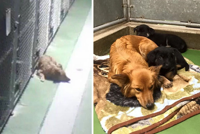 Maggie se escapó de su jaula en mitad de la noche para reconfortar a unos cachorros huérfanos que lloraban