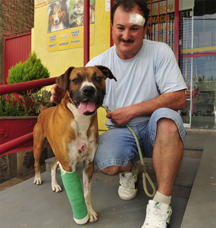 Dog Named Max Took Three Bullets To Save His Owner When They Were Attacked By Two Armed Robbers