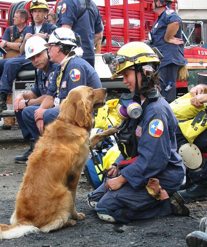 Bretagne fue el último perro superviviente del 11-S. Tenía 2 años entonces, falleció a los 16