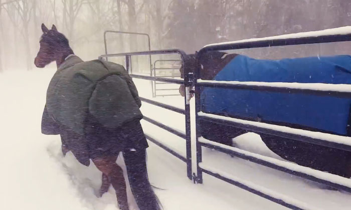 Internet Can't Stop Laughing At These Horses' Reaction After Their Owner Let Them Out In The Snow