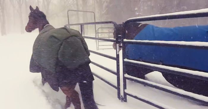 Finally Winter Wimps Out >> Internet Can T Stop Laughing At These Horses Reaction After Their
