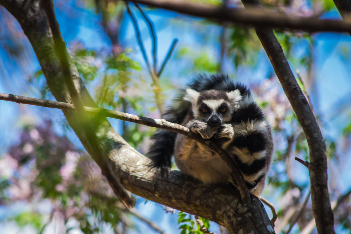 30+ Photos Of Unbelievable Madagascar That Will Make You Pack Your Backpack And Hit The Road