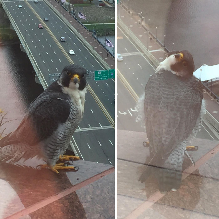 I Work On The 22nd Floor And Also Have A Feathered Friend Who Sometimes Poses For Me