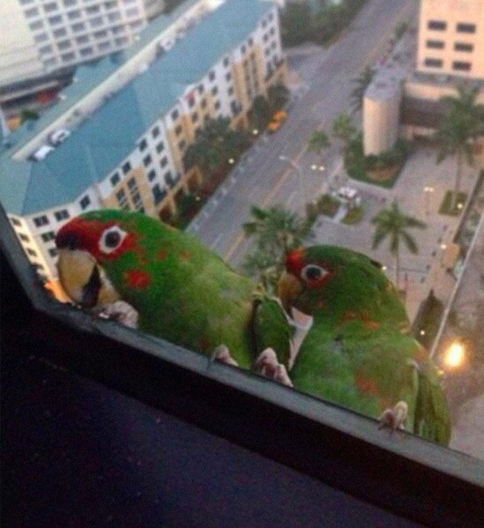 In Miami We Too Have Feathery Friends That Drop By! Say Hello To Ted And Terry