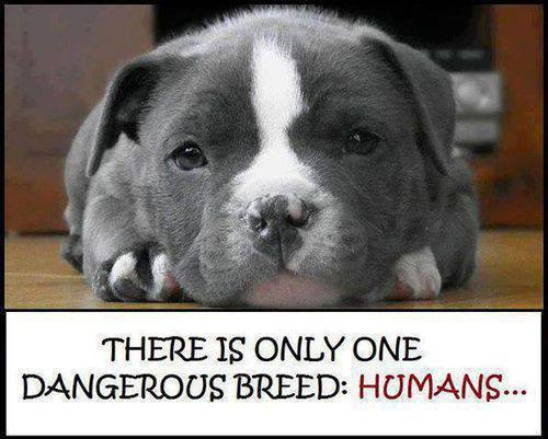 only-one-dangerous-breed-humans-5a4bc951df452.jpg