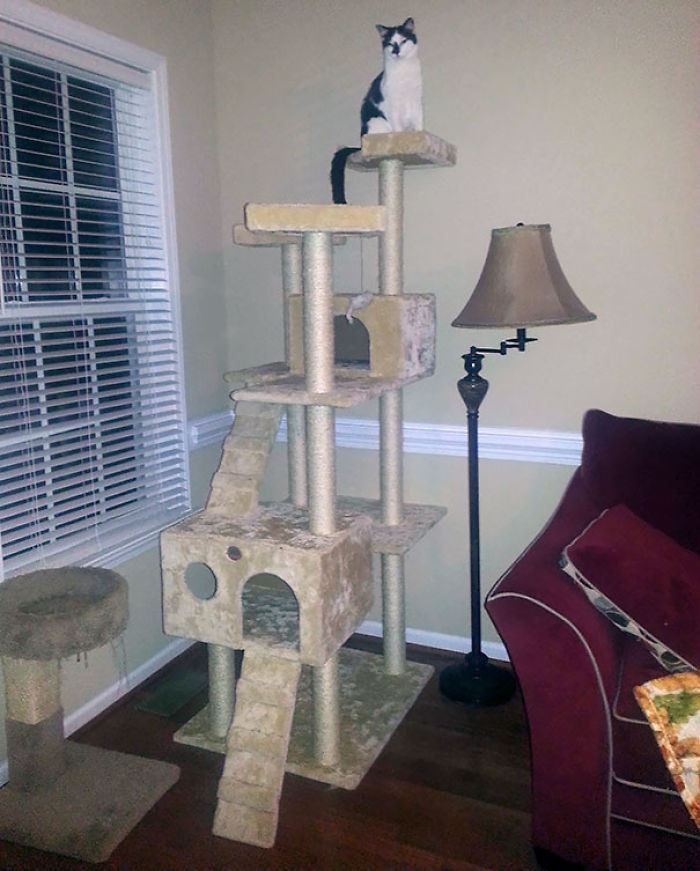 My Wife Was Angry At Me For Buying Such A Huge Cat Tree For Our Blind Cat.