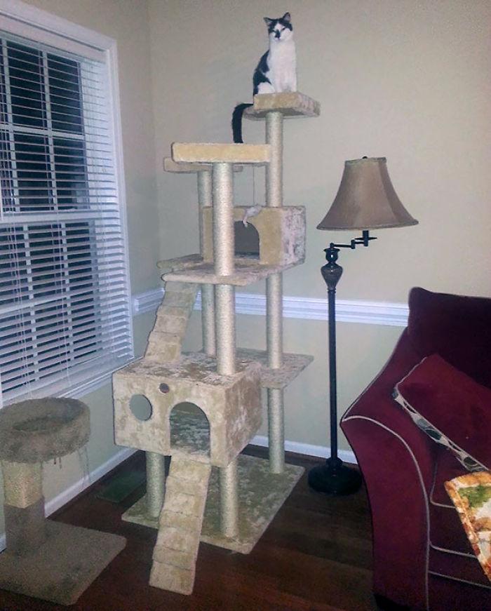Mi esposa se enfadó conmigo por comprarle algo tan grande a nuestra gata ciega, ya que no iba a poder escalarlo. 36 horas después