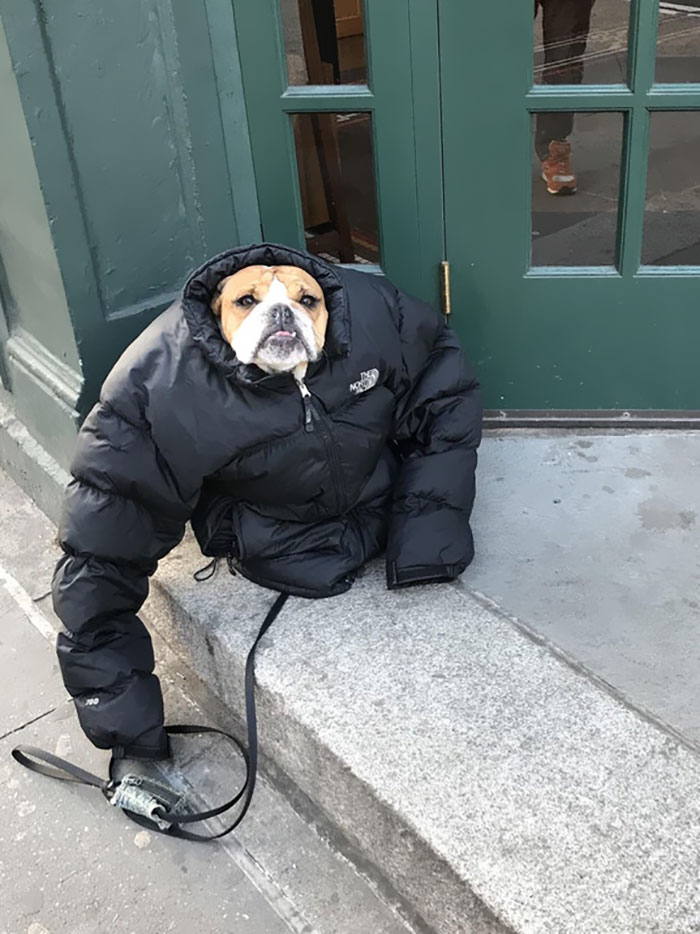 It Was Cold So I Gave My Dog My Jacket