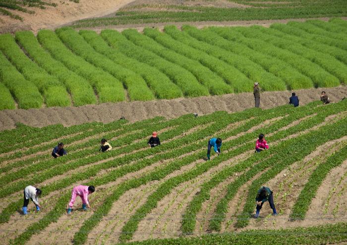 Niños trabajando en las granjas