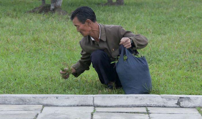 Los norcoreanos a menudo recogen hierba de los parques para comérsela. Los guías se ponen furiosos si te ven hacer la foto