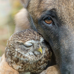 Dog-Ingo-Owl-Friends-Tanja-Brandt