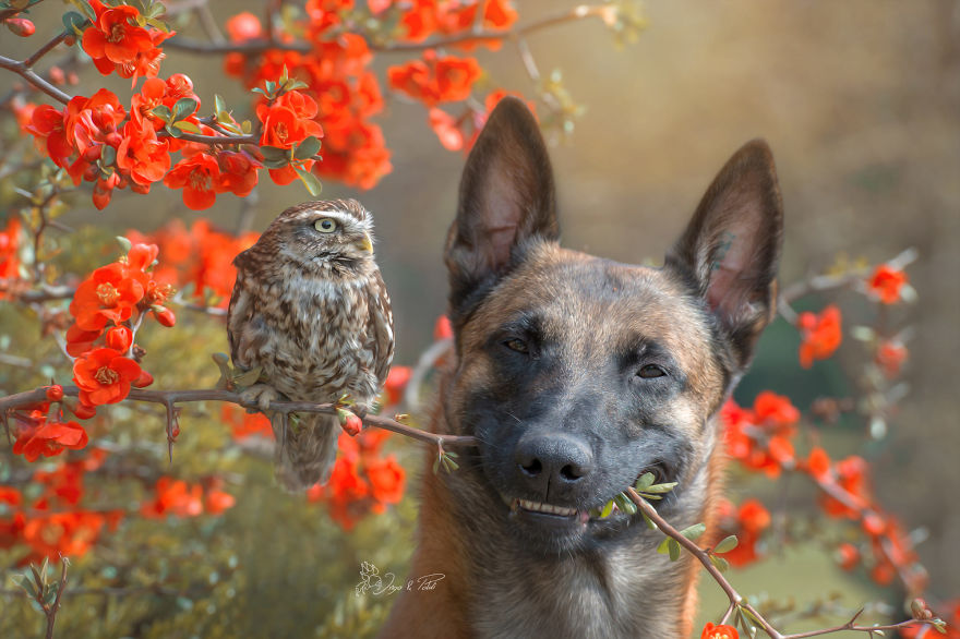 Собака-Инго-Сова-Друзья-Tanja-Brandt