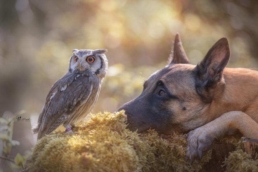 Фотографии собаки