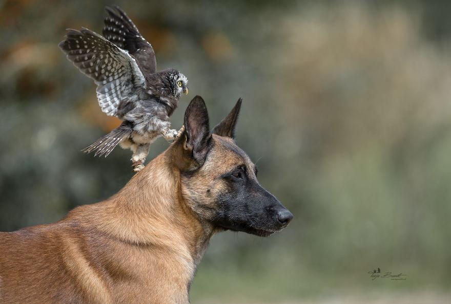 Dog-Ingo-Owl-Friends-Tanja-Brandt