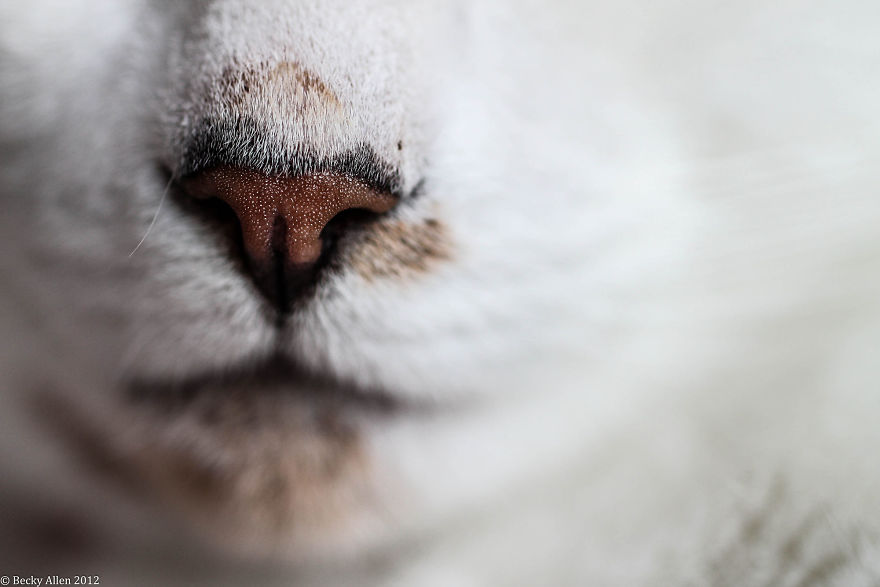 Cat-Noses-Macro-Photography