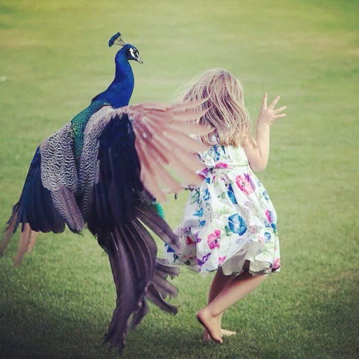 This Little Girl In The Park Kept Winding Up A Peacock And It Took Revenge When She Turned Her Back