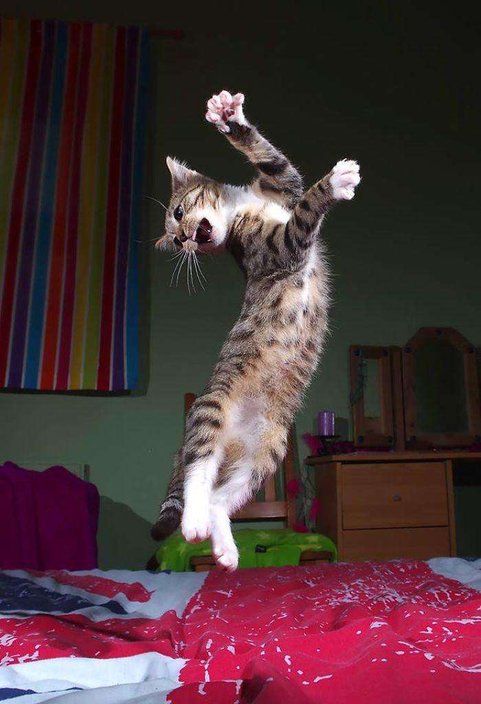 Flamenco Kitty