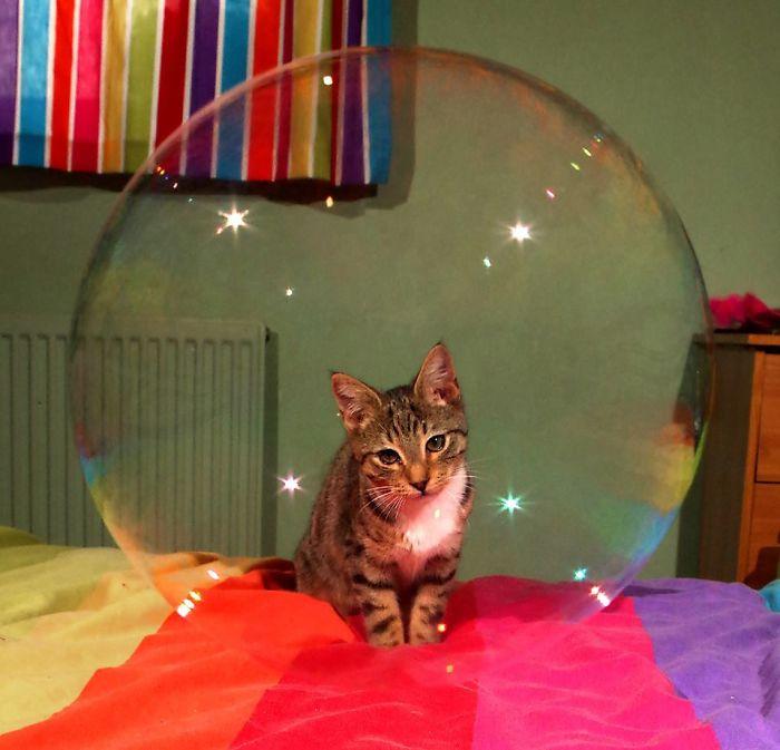 Sparkly Kitty