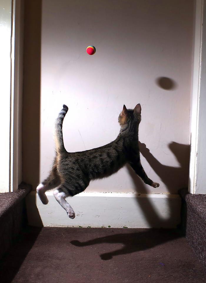 Surreal Kitty