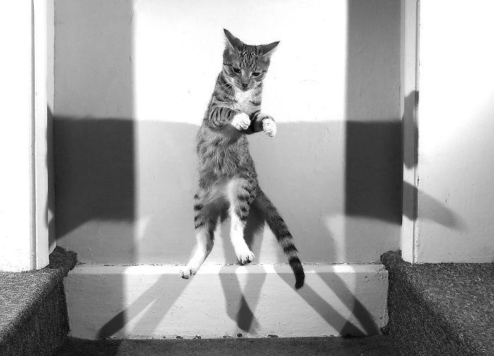 Matrix Kitty
