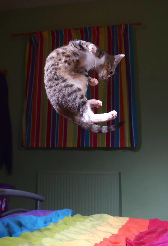 Trampoline Kitty