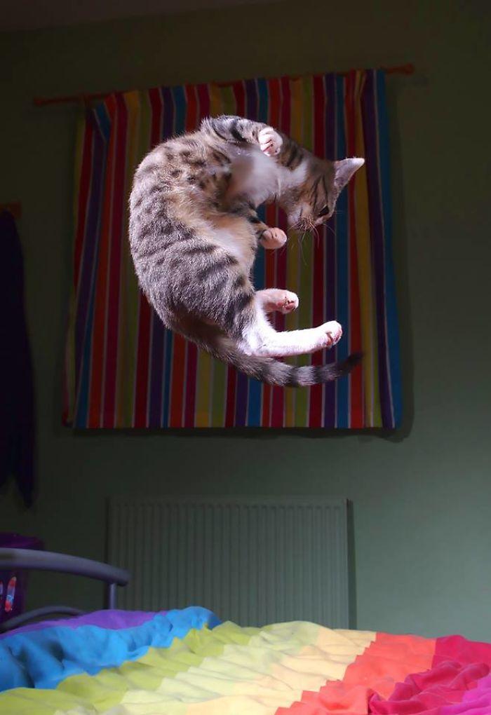 Trampoline Kitty
