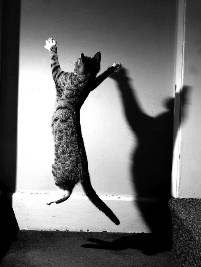 Kitty Noir
