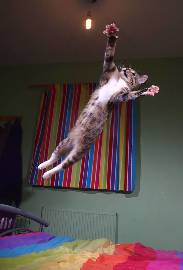 High Flying Kitty