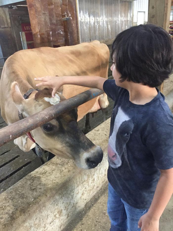 A la vaca parece gustarle la camiseta