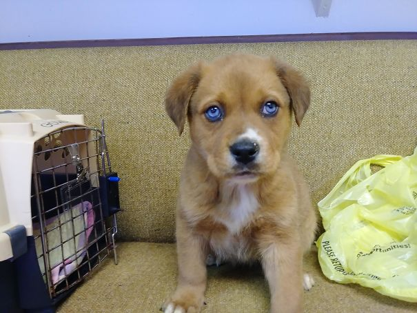 This Pupper Was Dropped Off At The Shelter Where I Work