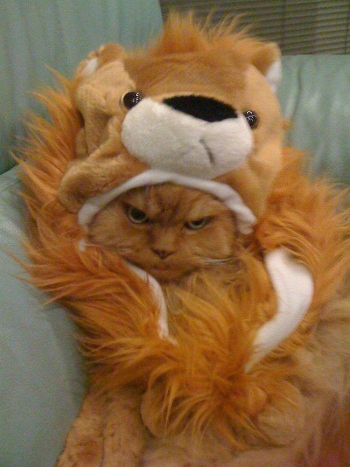 El gato disfrazado más cabreado del refugio