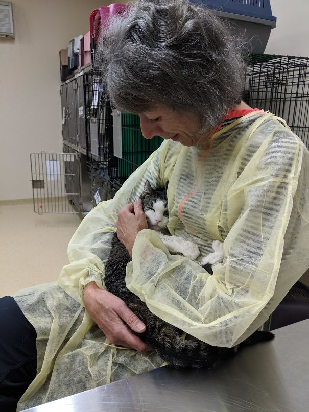 I Work In An Animal Shelter. This Is Meme, A Very Senior Cat Getting Love From A Volunteer