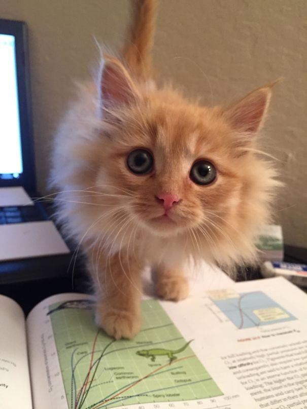 I Work For An Animal Shelter So Sometimes I Foster Kittens. Meet Sunflower